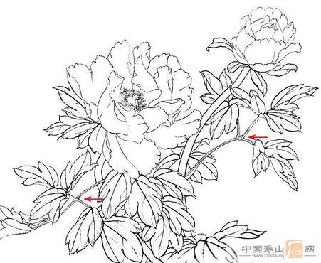 简笔画牡丹花的画法图片