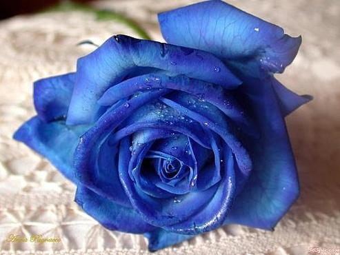 宋子洋个性头像_≮蓝色妖姬≯>的照片