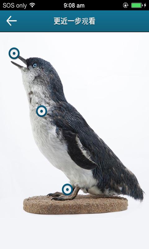 Penguins-应用截图