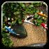 鲤鱼 體育競技 App LOGO-APP試玩