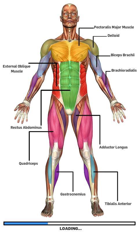 玩休閒App|肌肉解剖免費|APP試玩